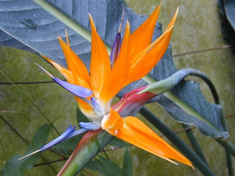 کاشت و تکثیر گلهای زینتی